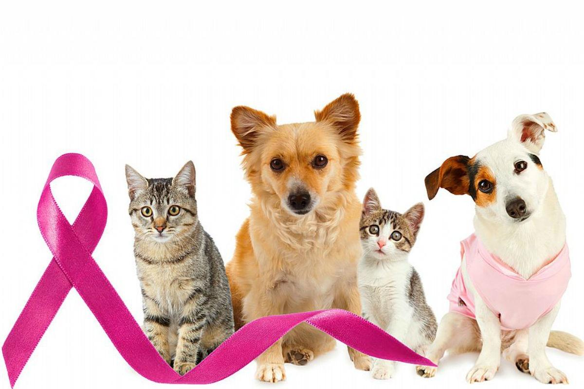 Outubro Rosa Animal – Hospital orienta sobre diagnóstico e prevenção do câncer de mama em pets
