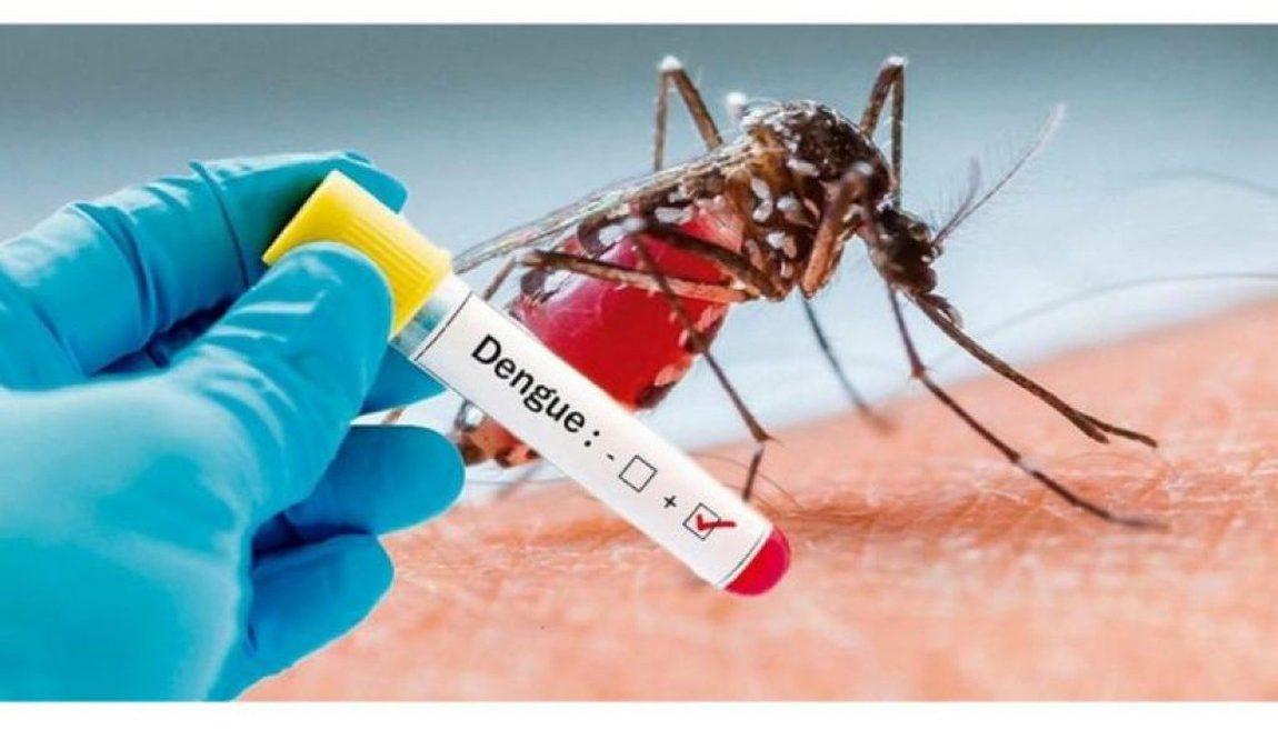 Brasil registra alta de 71% dos casos de dengue em 2020 | Newslab