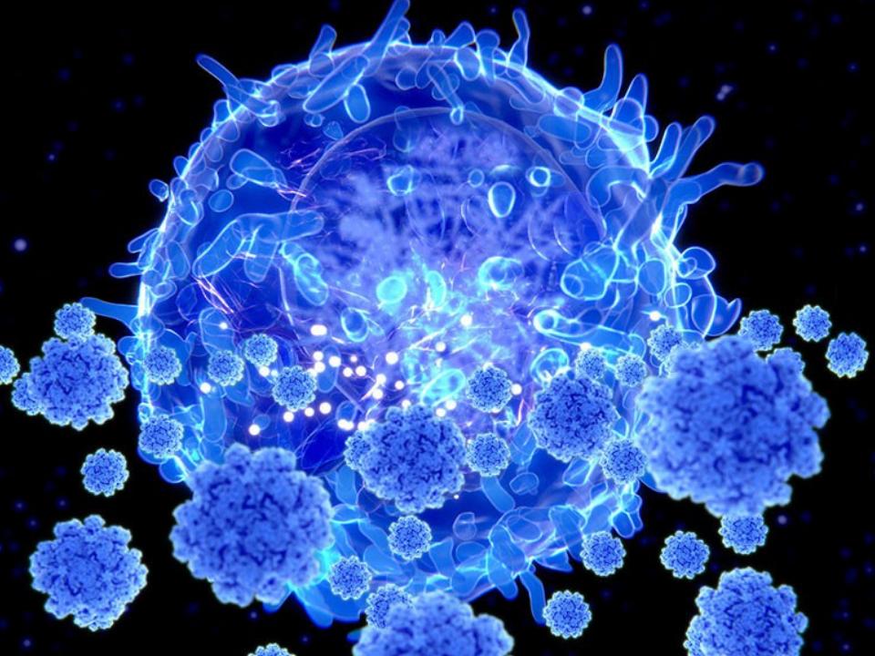 Como as células T 'assassinas' podem aumentar a imunidade COVID em face de novas variantes