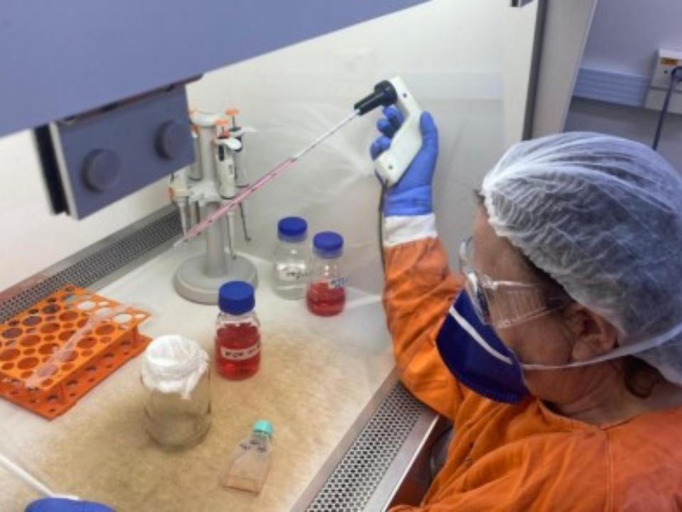 Anticorpos de infectados pela primeira cepa do coronavírus mostram boa atividade contra a P.1 em testes