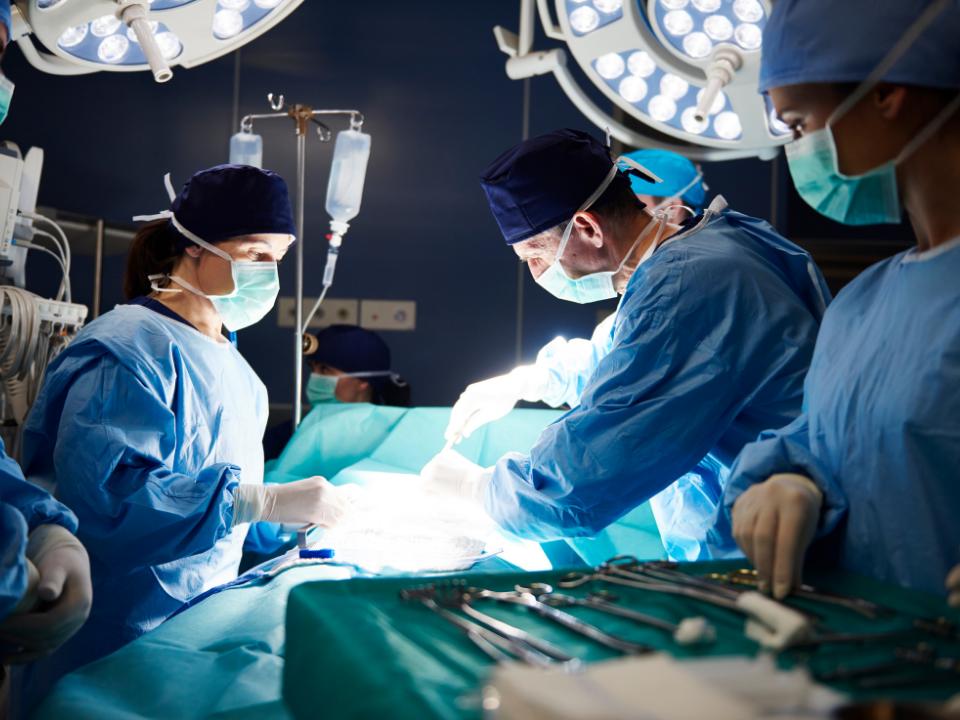 Projeto de transplante de órgãos entre duas espécies diferentes já é uma realidade no Brasil