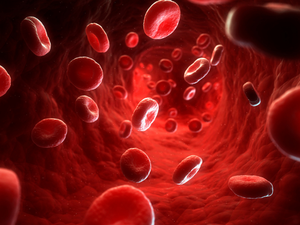 Os glóbulos vermelhos ativam o sistema imunológico inato